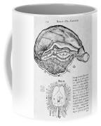 Brain And Pineal Gland Coffee Mug