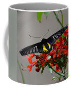 Brazilian Moth Coffee Mug