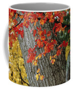 Bright Red Maple Leaves Against An Oak Coffee Mug by Tim Laman