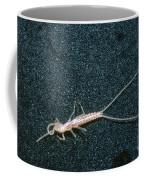 Bristle-tail, A Rare Cave Invertebrate Coffee Mug