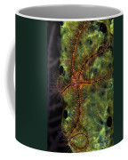 Brittle Star On Sponge, Belize Coffee Mug