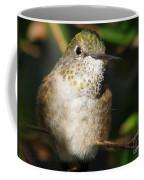 Broadbill Hummingbird Coffee Mug
