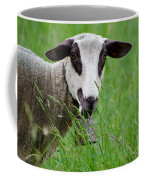 Brown And White Sheep Coffee Mug