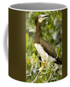 Brown Booby Sula Leucogaster Coffee Mug by Tim Laman
