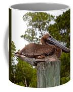 Brown Pelican At Rest Coffee Mug