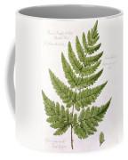 Buckler Fern Coffee Mug