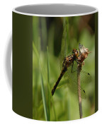 Bug Eyed Dragon Fly Coffee Mug