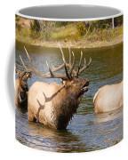 Bugling Bull Elk And 2 Female Cows In Estes Lake  Co Coffee Mug