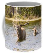 Bugling Bull Elk And Calf Colorado Rut 5 Coffee Mug