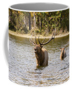Bugling Bull Elk And Calf Colorado Rut  Coffee Mug