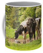 Bull And Cows Grazing On Grass In Farm Maine Coffee Mug