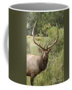 Bull Elk Eyes Coffee Mug by James BO  Insogna