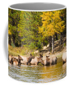 Bull Elk Watching Over Herd 2 Coffee Mug