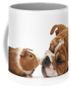Bulldog Pup Face-to-face With Guinea Pig Coffee Mug