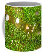 Bumblebee Shrimp On Adhesive Anemone Coffee Mug