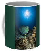 Bumphead Parrotfish, Australia Coffee Mug