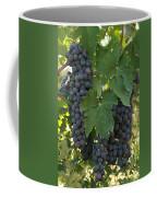 Bunches Of Sangiovese Grapes Hang Coffee Mug