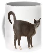 Burmese-cross Cat Coffee Mug