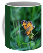 Butterfly In Square  Coffee Mug