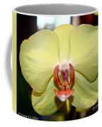 Buttery Coffee Mug