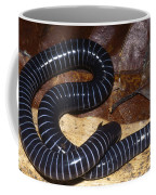 Caecilian Coffee Mug