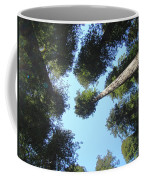 California Redwood Trees Fine Art Prints Forest Coffee Mug