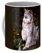 Canada Lynx With Paw Up   Coffee Mug