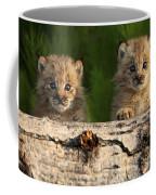Canadian Lynx Kittens Looking Coffee Mug