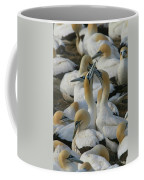 Cape Gannets Coffee Mug
