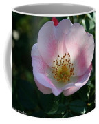 Carefree Delight Coffee Mug