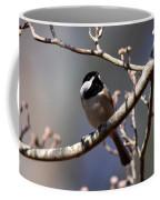 Carolina Chickadee - Glamour Shot Coffee Mug