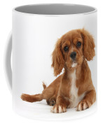 Cavalier King Charles Spaniel Puppy Coffee Mug