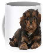 Cavapoo Pup Coffee Mug