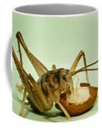 Cave Cricket Eating An Almond 2 Coffee Mug
