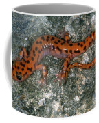 Cave Salamander Coffee Mug