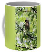 Cedar Waxwing Among Apple Blossoms Coffee Mug