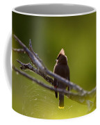 Cedar Waxwing Perched In Tree Coffee Mug