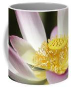 Center Of A Lotus Coffee Mug