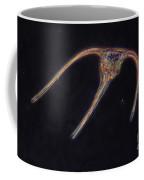 Ceratium Sp. Dinoflagellate, Lm Coffee Mug