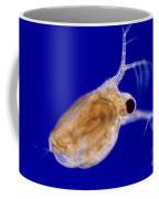Ceriodaphnia Coffee Mug