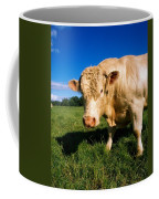 Charolais Bull, Ireland Coffee Mug