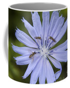 Chicory For Three Coffee Mug