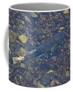 Chinook Salmon Coffee Mug