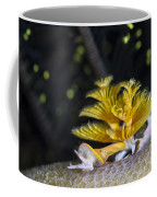 Christmas Tree Worm In Raja Ampat Coffee Mug