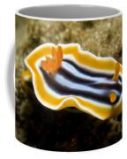Chromodoris Magnifica Nudibranch Coffee Mug