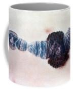 Chromosome Replication Coffee Mug by Science Source