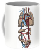 Circulatory System Coffee Mug