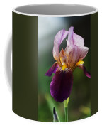 Classic Purple Two-tone Dutch Iris Coffee Mug