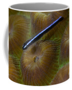Close-up Of A Goby On Coral, Belize Coffee Mug