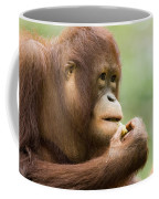 Close-up Of An Orangutan Pongo Pygmaeus Coffee Mug